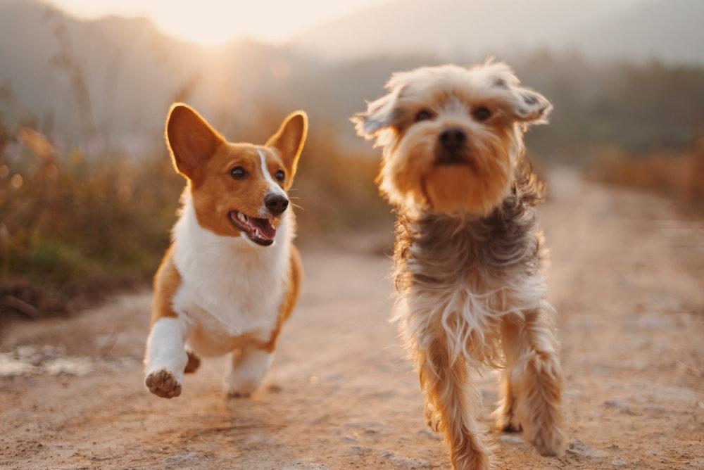 Haustiere verbessern Ihr Leben